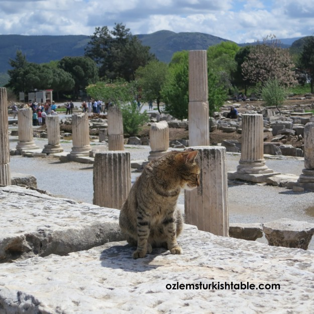 Ephesus and the lovely cats ; )