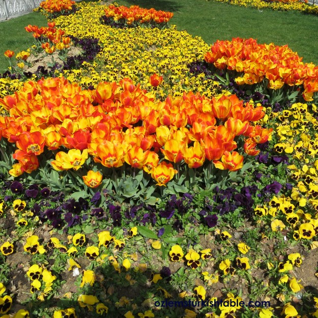 Spring is a wonderful time to enjoy the tulips, lale, in Istanbul