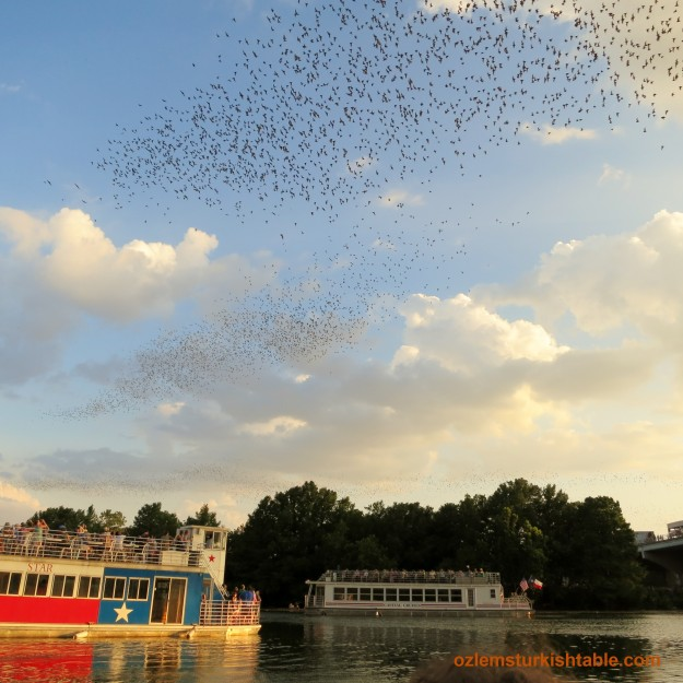 Watching thousands of bats taking off at Town Lake, Austin - Texas; a sight to see.