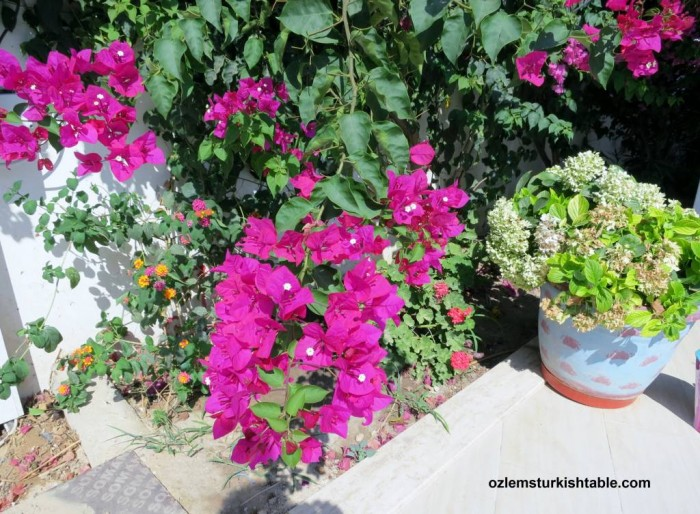 Beautiful pots and flowers of Turgutreis, Bodrum